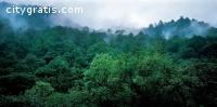 Need a Professional Tree Arborist in Tok