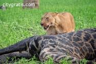 Adventure Safaris in Tanzania
