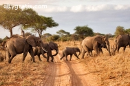 @Adventure Safaris in Tanzania