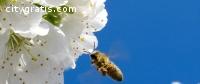 Bee Control Houston   Budget Bee Control