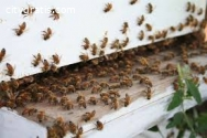 @Bee Hive Removal