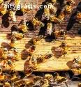 Bee Wasp Control