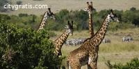 Budget Safari In Kenya