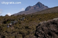 @Climbing Kilimanjaro on the Shira Route