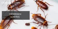 Cockroach Control Services in Colorado S