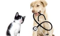 Dog Rabies Vaccinations McAllen