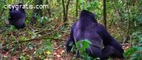 @Gorilla Trekking in Bwindi Impenetrable