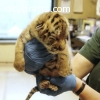 Healthy Tiger Cubs And Cheetahs For Sale