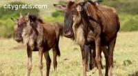 Kenya Exclusive Tented Safari