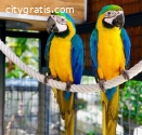 Macaws Parrots and Parrot Eggs
