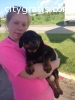 male and female rottweiler puppies avail