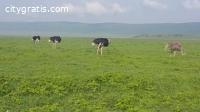 @Mikumi National Park Tanzania