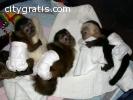 monkey babies and chimpanzee babies
