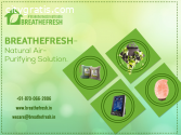 Natural Air Purifiers Solution |Breath F