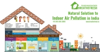 Natural Solution to Indoor Air Pollution