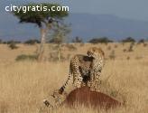 Offering Kenya Lodge Safaris at Affordab