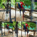 Parrots and fertile parrots eggs