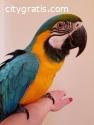 Parrots and Parrot Eggs For Sale