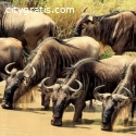 @Tailor Made Holidays in Kenya