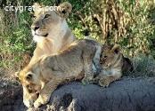 @Tanzania and Kenya Camping Safari