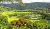 ... Term Insurance Hawaii